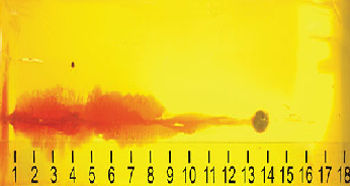 .45 ACP Hornady round in gel shows a wider wound channel than the other calibers tested